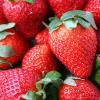 strawberries farmers market