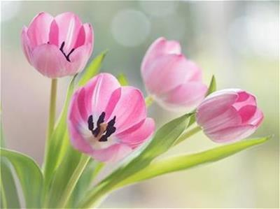 Flower Photo by Anja Pietsch via Flickr
